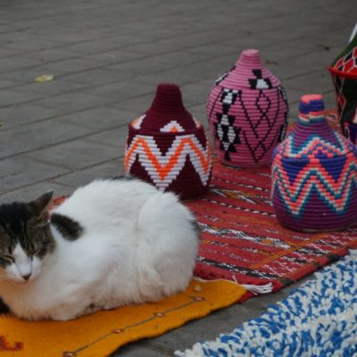 Katzen sind in Marokko allgegenwärtig