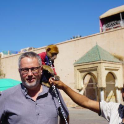 Zwei Affen am Markt in Meknés